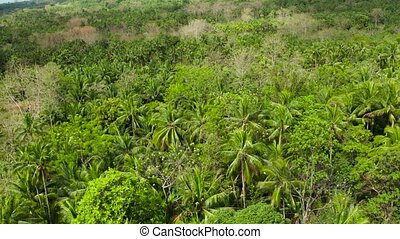 Tropical landscape with rainforest. Camiguin, Philippines -...