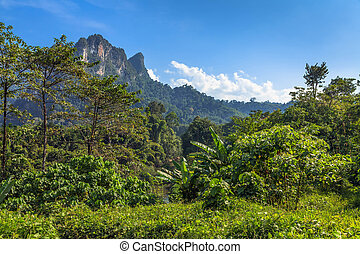Tropical Landscape with rainforests
