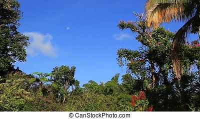 landscape - tropical landscape with trees ,flowers and blue...