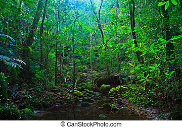 tropical landskab, thailand, asien, rainforest