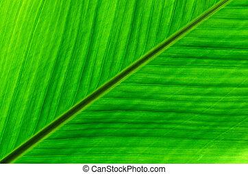 Tropical leaf details