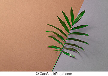 Tropical leaf on brown and grey paper background. Flat lay, top view, minimal design template with copyspace.