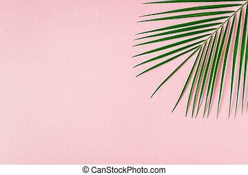 Tropical leaf on pastel background.