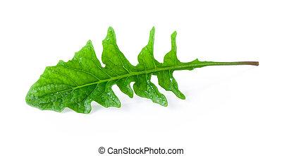 tropical leaf on white background