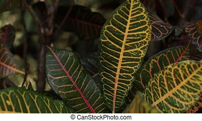 Tropical leafs jungle background. Closeup, Bali island