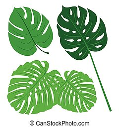 Tropical Leaves Collection, isolate vector. Set