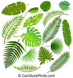 Tropical leaves collection vector illustration