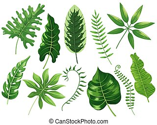 Tropical leaves. Exotic tropic leaf, botanic rainforest and tropics travel leafs painting cartoon vector isolated illustration set