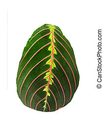 tropical leaves isolated on white background close up