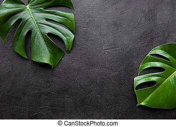 Tropical leaves monstera