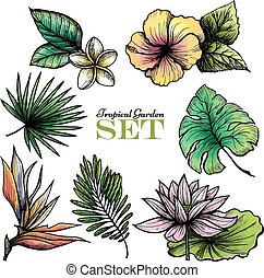 Tropical Leaves Set Color