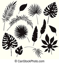 Tropical leaves silhouettes. Black jungle exotic leaf...
