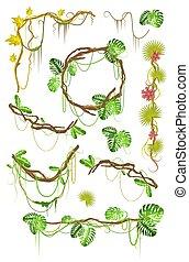 Tropical liana creeper plant decorative elements set, flat vector isolated illustration.