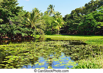tropical lilies on the lake Big Island of Hawaii