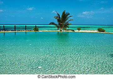 tropical, lujo, piscina, natación