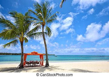 Tropical lunch - Lunch time on tropical sandy beach in...