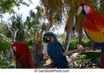 Tropical Macaws perched