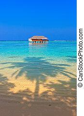 Tropical Maldives island - nature travel background