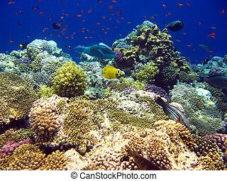 tropical, mar coral, arrecife, rojo