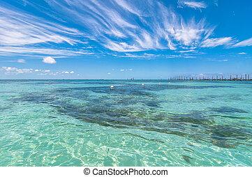 tropical, mar, en, isla mujeres, méxico