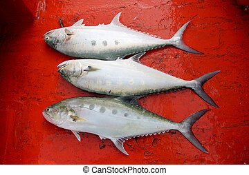 Tropical marine fish caught on a boat. - Tropical marine...