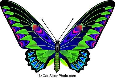 tropical, mariposa