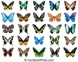 tropical, mariposas