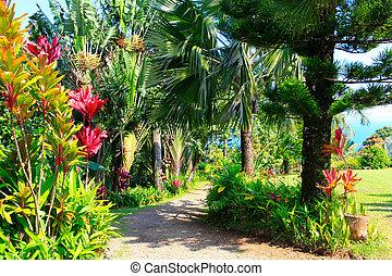 tropical, maui, eden, jardín, hawai