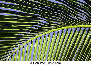 Tropical Maui Palm Tree Frond - Closeup view of a tropical ...