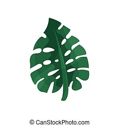 tropical, monstera, hoja, vector, ilustración