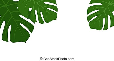 Tropical monstera leaves frame