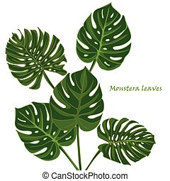 leaves of tropical plant monstera vector clip art search illustration drawings and eps. Black Bedroom Furniture Sets. Home Design Ideas