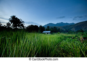 tropical, montaña, choza