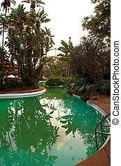 tropical, nade, piscina