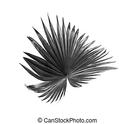 tropical nature black fan windmill palm leaf pattern on white