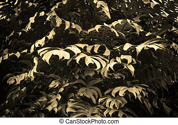tropical nature black monstera palm leaves pattern