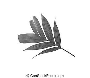 tropical nature black palm leaf pattern