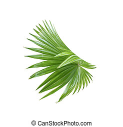 tropical nature green fan palm leaf pattern on white
