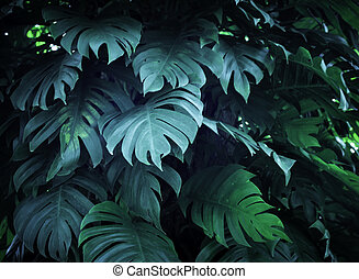 tropical nature green monstera palm leaves pattern