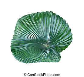 tropical nature green palm leaf pattern