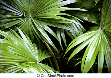 tropical nature green palm leaves pattern