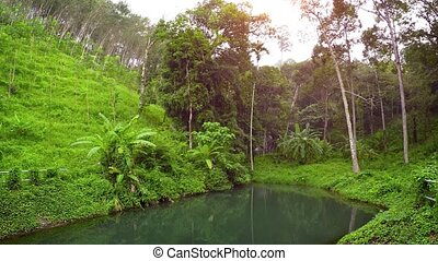 Tropical Nature Trail with Safety Railing beside natural Pond