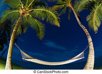 Tropical Night, Palm Trees and Hammock