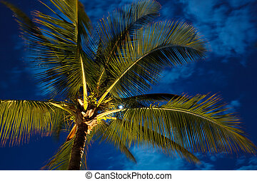 Tropical Night Sky, Palm Trees and Moon