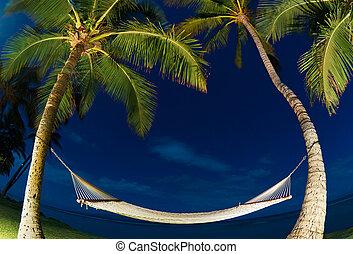tropical, noche, árboles de palma, y, hamaca