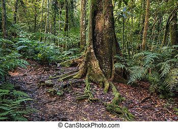 tropical, nueva caledonia, rainforest
