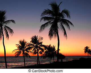 tropical, ocaso