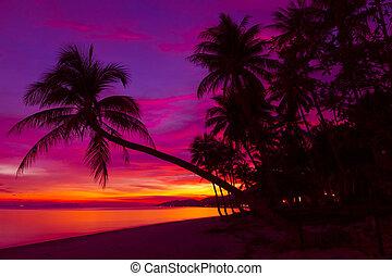 tropical, ocaso, con, árboles de palma