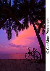tropical, ocaso, con, árboles de palma, y, bicicleta, en la playa, vertical, panorama