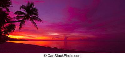 tropical, ocaso, con, palmera